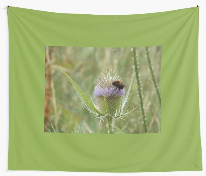 Beautiful bee on purple thistle by derbyshireduck