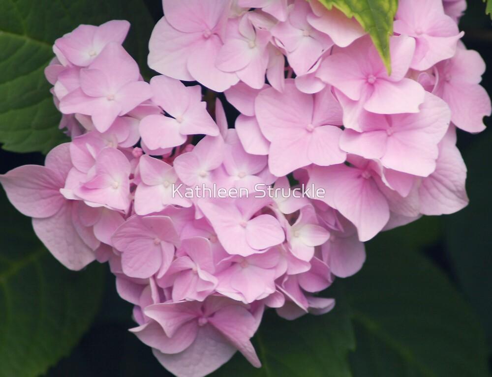 Pink Hydrangea by Kathleen Struckle
