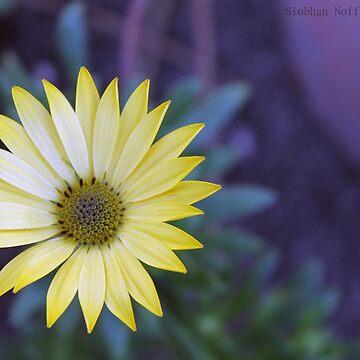 yellow by Snofpix