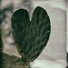 Padded Heart by Judi FitzPatrick