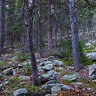 Rocky Nature Landscape by Bo Insogna