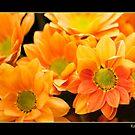 Orange 2 by Malcolm Garth