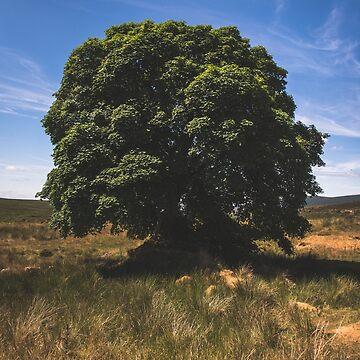 Sally Gap Tree by shaymurphy