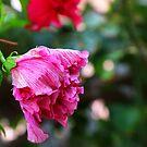Reservierte Blume zusammengerollt, um nicht gestört zu werden von lucielitchi