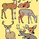 Deer by Porto881