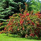 Flowering Bush by Linda Miller Gesualdo