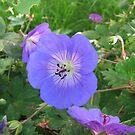 Blue Beauty - Summer Flower von BlueMoonRose
