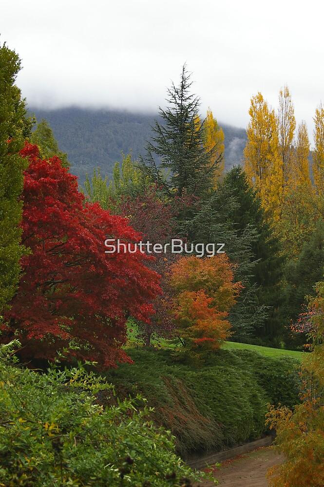 Cascade Gardens in Autumn (Hobart) by ShutterBuggz