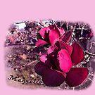 Magnolia Madness by jennyjeffries