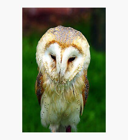 Barn Owl Photographic Print