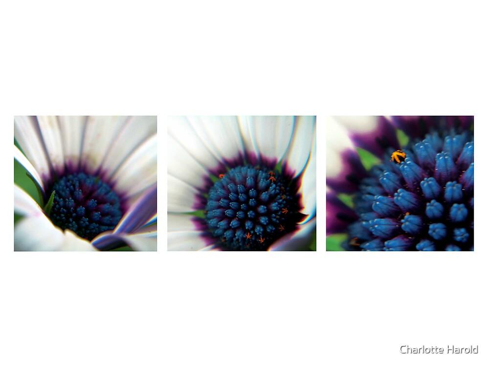 Purple Daisy Stories by Charlotte Harold