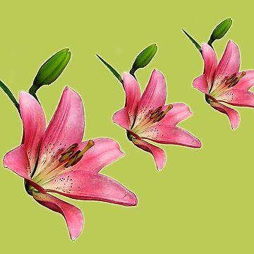 Lilies by klipz