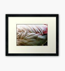 Flamingo Feathers Framed Print