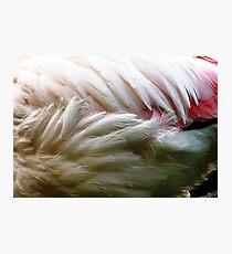 Flamingo Feathers Photographic Print