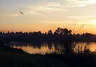 Coasting at Sunset by Jaeda DeWalt
