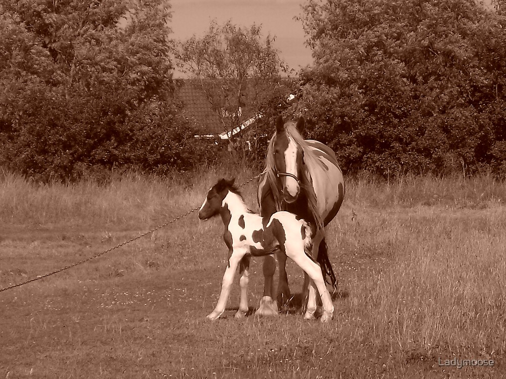 `Diana Dors` and foal by Ladymoose