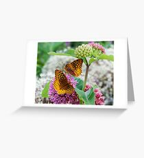 Great Spangled Fritillary Butterflies Greeting Card
