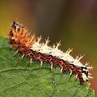 COMMA Caterpillar by AnnDixon