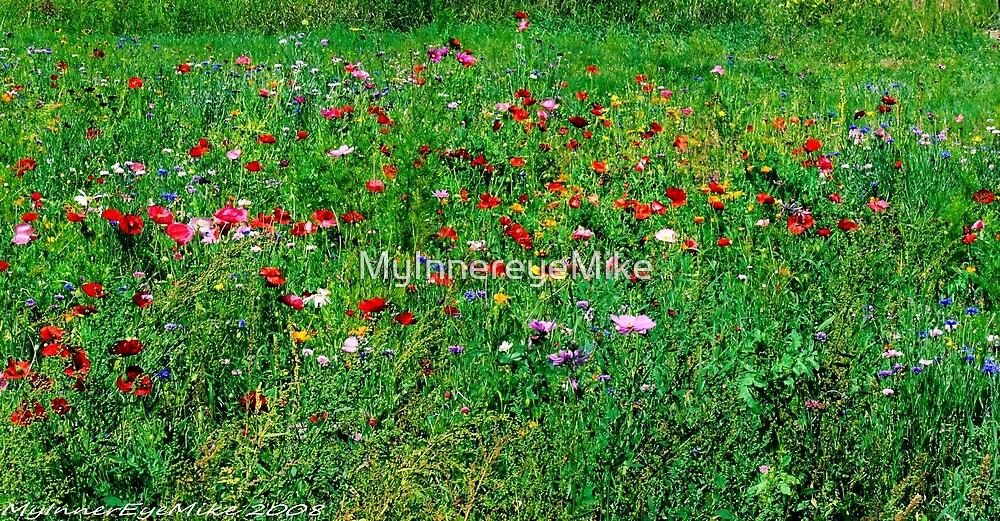 #572   Poppies & Wild Flowers by MyInnereyeMike