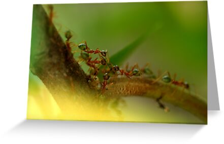 Army of Ants by HeatherEllis