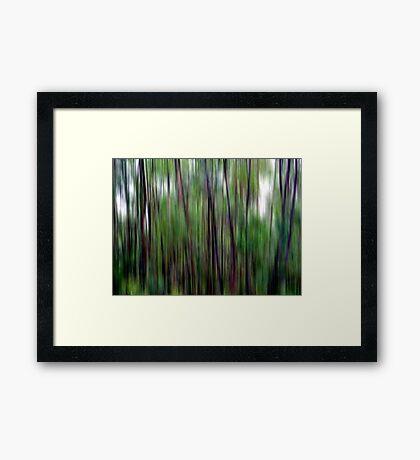 Bushwalking Framed Print