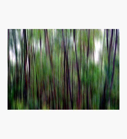 Bushwalking Photographic Print