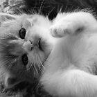 CutieKitty by ViktoryiaN