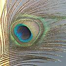 Peacock Feather No.1 | Peacocks | Feathers | Nadia Bonello | Ottawa | Canada by Nadia Bonello
