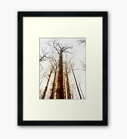 Fire trees... Framed Print