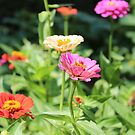Colorful Flower Garden by Southern  Departure