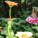 Butterfly, Flower Garden  by Southern  Departure