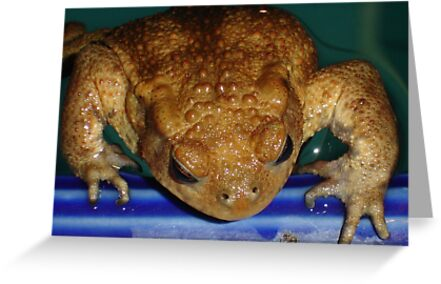 Bufo Bufo Clinging To The Edge Of A Swimming Pool by taiche