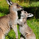 A kiss for mum. by scottsphotos