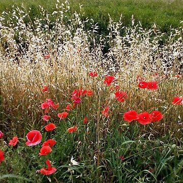 Poppies by frankiesgirl