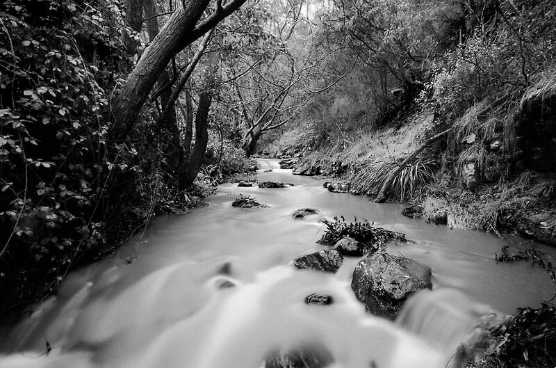 Cascade Rivulet #1, hobart, Tasmania, 2000 by Blake Pendlebury