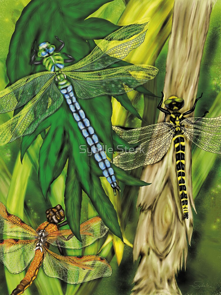 Dragonflies by Sybille Sterk