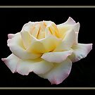 White Rose Mystery by Gregory J Summers