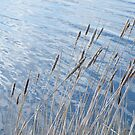 Reeds and calm water by Ditherella