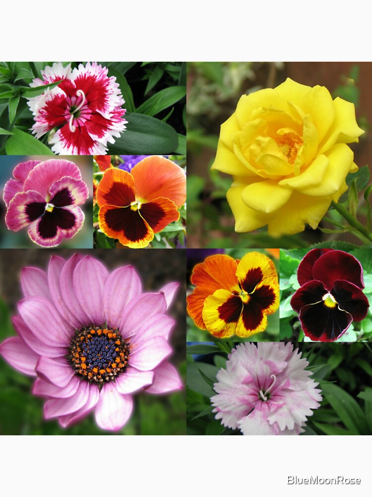 Sunkissed Summer Flowers Collage - ungerahmt von BlueMoonRose