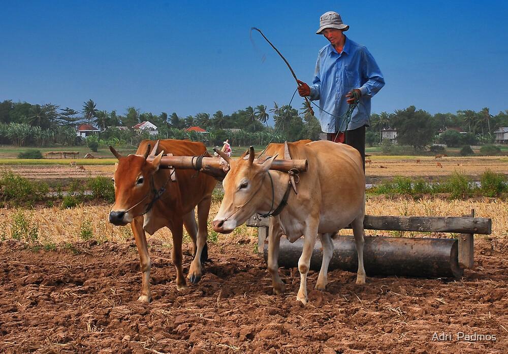 Cambodian Farmer by Adri  Padmos