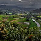 Kauai Valley--Hawaii by milton ginos