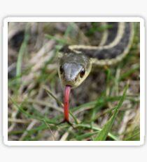 Snake up close Sticker