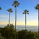 Palms San Simeon by Lexi