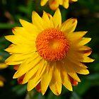 Golden Sunburst by Penny Smith
