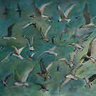 sea birds by Jeremy Wallace