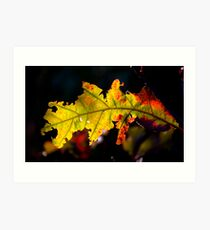 Autumn in Mentone Art Print