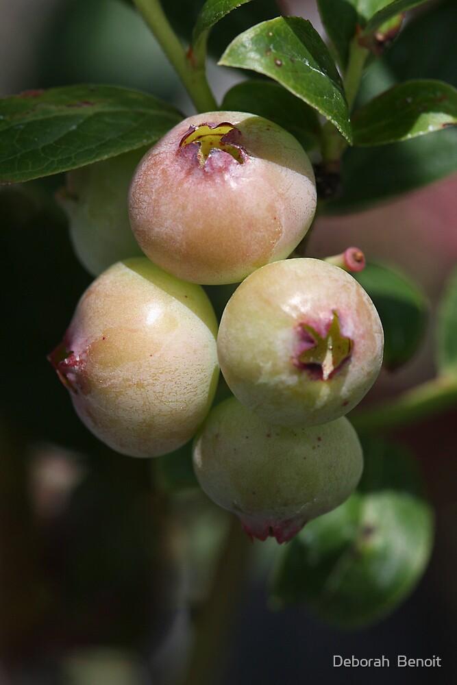 New Fruit of Summer by Deborah  Benoit