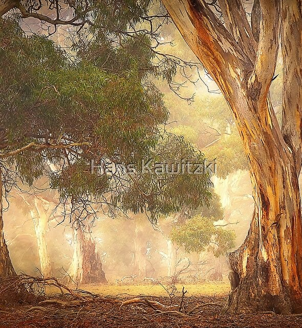 0765 Gum Trees - Anakie by Hans Kawitzki