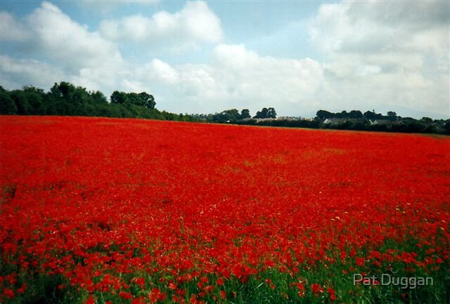 Quot The Poppy Field Clonmel Co Tipperary Ireland View Large