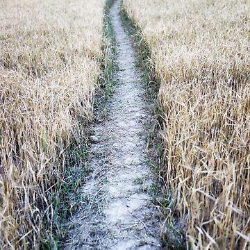 dry crops alley von Mows